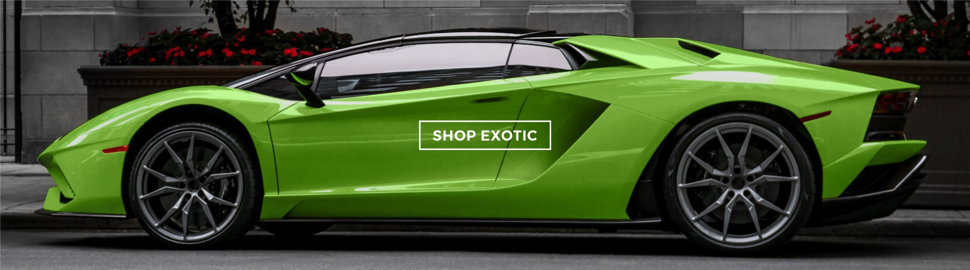 Shop Exotic
